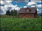 """Foto Fanka """"kartoflisko"""" (2014-04-16 11:42:57) komentarzy: 5, ostatni: Ziemniaczana chatka... Podoba mi się zdjęcie. :{)"""