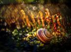 """MacroFun """"M&... cdn"""" (2014-05-03 15:57:35) komentarzy: 7, ostatni: Piękne kolory, kapitalne rozmycia....., cuda natury."""