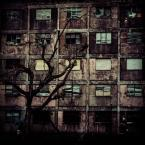 """Ijon Alter """"schronienie"""" (2014-05-07 01:39:42) komentarzy: 17, ostatni: a to jest dobre"""