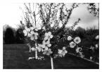 """KKozlowski """"Wiosna / Spring"""" (2014-05-09 11:00:02) komentarzy: 1, ostatni: Zdjęcia nie kwalifikujące się do kategorii retro będziemy w końcu wyrzucać z serwera. Prosimy odpowiednio wybierać kategorie i nie kombinować z wolnym limitem retro."""
