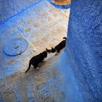 """Meller """"Zwierciadło"""" (2014-05-13 23:37:10) komentarzy: 10, ostatni: piękne te kocie opowieści"""