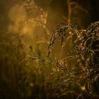 """monavida """"o zachodzie"""" (2014-05-21 13:28:01) komentarzy: 12, ostatni: pięknie iskrzy."""