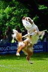 """Kubuś Puchatek """"... Latające psy ..."""" (2014-06-02 19:18:15) komentarzy: 1, ostatni: +"""