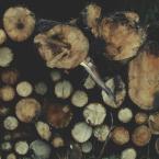 """letargowa """"porąbane drewno"""" (2014-06-13 12:06:58) komentarzy: 0, ostatni:"""