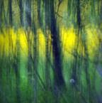 """monavida """"z rzepakiem w tle"""" (2014-06-16 14:58:35) komentarzy: 3, ostatni: pięknie malowane"""