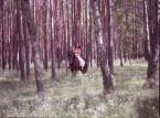 """wlamparski """"leśny duch"""" (2014-06-28 14:13:05) komentarzy: 2, ostatni: fajna tonacja ;)"""