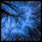 """Trollek """"Veins"""" (2014-07-12 22:18:32) komentarzy: 1, ostatni: ładnie, podoba mi się ta perspektywa"""