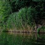 """letargowa """"za zieloną trawą"""" (2014-07-30 13:17:22) komentarzy: 1, ostatni: czym robione?"""