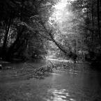 """KKozlowski """"Badylki we wodzie"""" (2014-07-30 21:22:35) komentarzy: 18, ostatni: tia moglo by być :)"""
