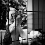 """Ijon Alter """"pięć palców"""" (2014-08-06 00:09:22) komentarzy: 4, ostatni: puento - o tak stopy mają już teraz bestii :)"""