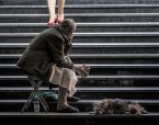 """sandiego """""""" (2014-08-21 21:08:20) komentarzy: 12, ostatni: A schody latem są ciepłe...jak na schody.  Patrzę na stopy, dłonie, pieska. Nie wiem, co widzą oczy. Nie chcę widzieć  chyba."""