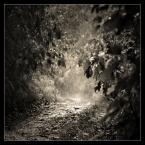 """matyldaW """"Nic"""" (2014-08-25 18:53:14) komentarzy: 37, ostatni: Teraz tak nie jest z Czarną . Biała Przemsza , Ryszka-Sławków meandruje w dzikim korycie przez przepiękne lasy. Też miałam kiedyś inne zdanie, Tom."""