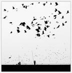 """anfo """""""" (2014-08-27 14:00:49) komentarzy: 12, ostatni: Ptasiek...piękne odsłona kolejnej """"kartki"""""""