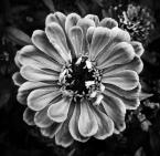 """kwasik """"smutno"""" (2014-08-31 23:50:41) komentarzy: 4, ostatni: typowa gliwicka roślinka :P"""