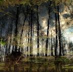 """asiasido """"na mokradłach"""" (2014-09-03 22:27:48) komentarzy: 6, ostatni: świetny klimat :)"""