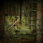 """Marcous """""""" (2014-09-09 15:31:12) komentarzy: 1, ostatni: im dalej w las, tym więcej drzew i tylko drzew."""