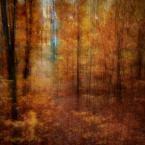 """monavida """"ciepło-zimno"""" (2014-09-19 13:17:53) komentarzy: 18, ostatni: :) dziękuję"""