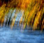 """monavida """"W niskich pokłonach wiatrom posłuszne,przybrzeżne trzciny..."""" (2014-09-30 11:38:12) komentarzy: 10, ostatni: dla mnie kolory na 10 :)"""