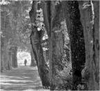 """donasz """"Starodrzew"""" (2014-10-07 21:06:11) komentarzy: 1, ostatni: Ona......... .odchodzi stąd"""