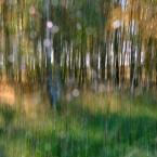 """monavida """"w świetle"""" (2014-10-09 12:41:24) komentarzy: 5, ostatni: Młodnik w rosie..."""