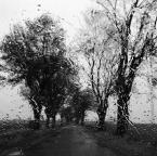 """asiasido """"jesienne 5"""" (2014-10-11 17:45:51) komentarzy: 10, ostatni: Smutne oblicze zwykle kolorowej jesieni :)"""