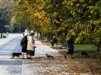 """dybon """"Jesień"""" (2014-10-13 00:47:39) komentarzy: 1, ostatni: g u t"""