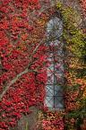 """macieknowak """"Jesień"""" (2014-11-06 23:15:12) komentarzy: 2, ostatni: Ładne kolory :)"""