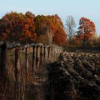 """BALTORO """"jesiennie  niezmiennie"""" (2014-11-14 08:39:51) komentarzy: 10, ostatni: Przyjemny widoczek :)"""