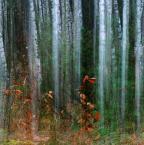 """asiasido """"Jesień"""" (2014-11-15 17:16:26) komentarzy: 13, ostatni: bardzo dobra seria"""