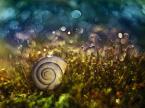 """MacroFun """"Muszelkowy świat..."""" (2014-11-15 22:41:06) komentarzy: 4, ostatni: przyjemny kadr"""