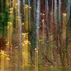 """asiasido """"jesień 2"""" (2014-11-16 19:53:24) komentarzy: 6, ostatni: a to jest SUPER"""