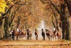 """asiasido """"Konie 1"""" (2014-11-22 19:04:39) komentarzy: 24, ostatni: Pięknie pokazane...."""