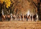 """asiasido """"konie 2"""" (2014-11-23 20:19:27) komentarzy: 15, ostatni: Wspaniale!  I kazde w cyklu konnym b.dobre:)"""