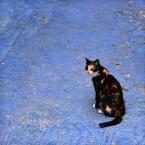 """Meller """"Miau.."""" (2014-11-23 21:00:02) komentarzy: 2, ostatni: ... miau ;)"""