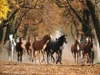 """asiasido """"konie 3"""" (2014-11-24 18:42:17) komentarzy: 5, ostatni: super"""