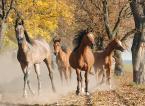 """asiasido """"konie 4"""" (2014-11-25 18:02:59) komentarzy: 12, ostatni: bdb"""