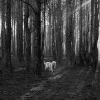 """rysiek57 """""""" (2014-11-25 18:16:16) komentarzy: 6, ostatni: Ujęcie, chwila, las, światło, pies w tym otoczeniu - bardzo to wszystko mi się podoba. . Mówiąc krótko - super temat. Tylko kadr mi nie przypadł do gustu... :{)"""