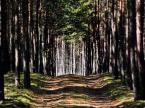 """BOGNA5 """"W lesie"""" (2014-11-27 21:02:34) komentarzy: 3, ostatni: Tu fajnie z GO."""