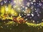 """MacroFun """"Zapasy ślimaków :) runda 1"""" (2014-11-30 08:48:59) komentarzy: 9, ostatni: mega :) kadr, swiatlo, barwy:)"""