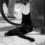 """ARauchert """"Mieszczuch"""" (2014-12-07 12:43:11) komentarzy: 1, ostatni: ciekawe spojrzenie"""