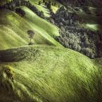 """śugob """"Val d'Orcia"""" (2014-12-16 07:33:09) komentarzy: 4, ostatni: piękne, rześkie :)"""