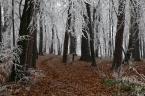 """Wojtek K. """"Czy to już zima, czy jesień jeszcze.... ?"""" (2014-12-20 18:13:17) komentarzy: 6, ostatni: Piękne!!!!!!!"""