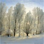 """papajedi """"prawda czasu ,  prawda ekranu"""" (2014-12-20 19:09:14) komentarzy: 14, ostatni: śnieg po pas to dopiero jest zima:) bardzo ładnie"""
