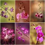 """mycatherina """"Orchidea mix"""" (2014-12-21 11:33:10) komentarzy: 13, ostatni: Pięknie je podajesz :)"""