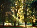 """mobius """"Jesień życia"""" (2014-12-21 19:50:54) komentarzy: 3, ostatni: Przyjemne bardzo :) Takie ciepłe i refleksyjne :)"""