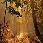 """Pluta """"Złota jesień..."""" (2014-12-22 10:42:16) komentarzy: 7, ostatni: No to wykąpię się w tym niezwykłym świetle jeszcze raz"""