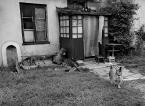 """asiasido """"Podwórkowe 9"""" (2015-01-02 18:33:16) komentarzy: 4, ostatni: Polmonik hał, hał, a gdzie foty ? psy wygryźli ?"""