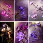 "mycatherina ""Bo kocham fiolety..."" (2015-01-03 14:22:48) komentarzy: 18, ostatni: gratulacje"