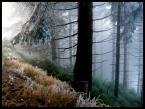 "hobo13 """" (2015-01-04 23:43:04) komentarzy: 3, ostatni: ale mi się podoba ten las"