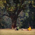 """Meller """"Drzewo Życia"""" (2015-01-16 18:45:30) komentarzy: 7, ostatni: bdb drzewo"""